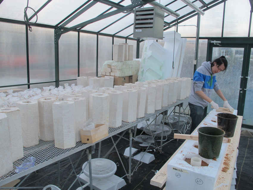 Molding of mycelium biocomposite into hexagonal blocks, UBC Greenhouse.